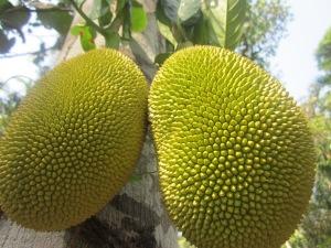 more jackfruit