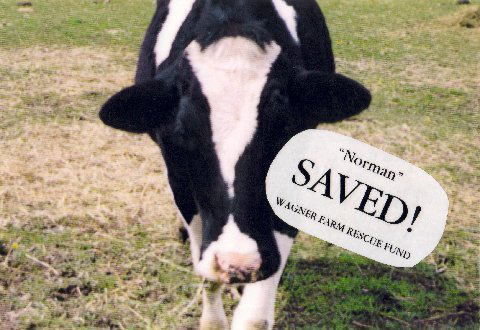 wagner farm rescue fund norman the cow
